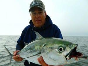 tampa bay fishing guide