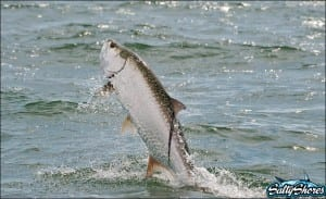 Spectacular jumps make Tarpon fishing exciting!