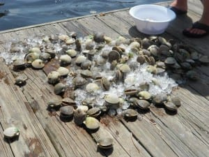 scalloping homosassa,scalloping charter homosassa,scalloping charter crystal river