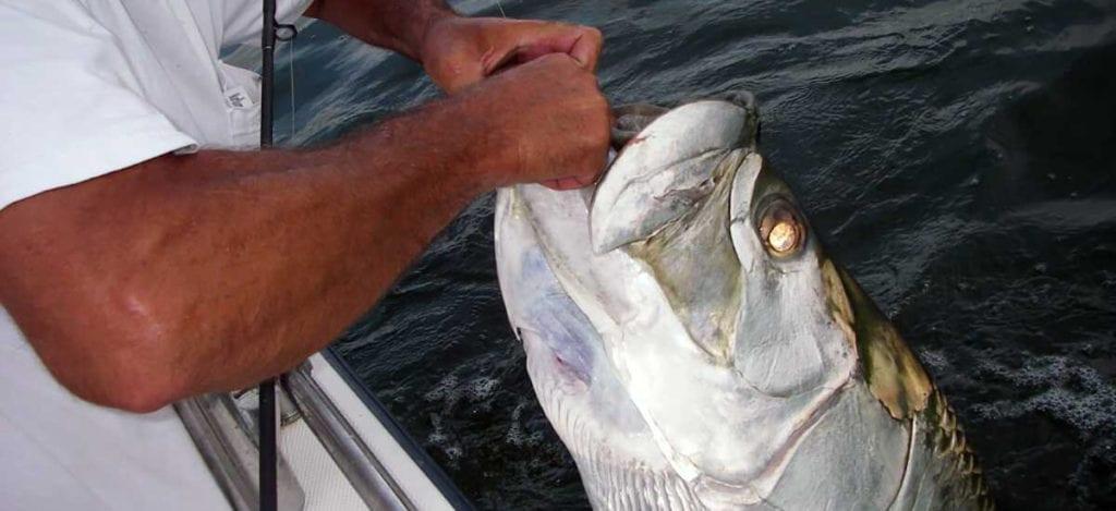 tampa-tarpon-fishing-charters-guide-trips1